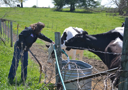 Dairy Cattle Care