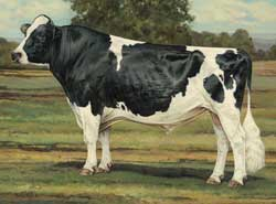 Modern Ideal Holstein Cow
