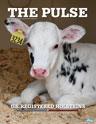 Holstein Pulse: Fall 2020
