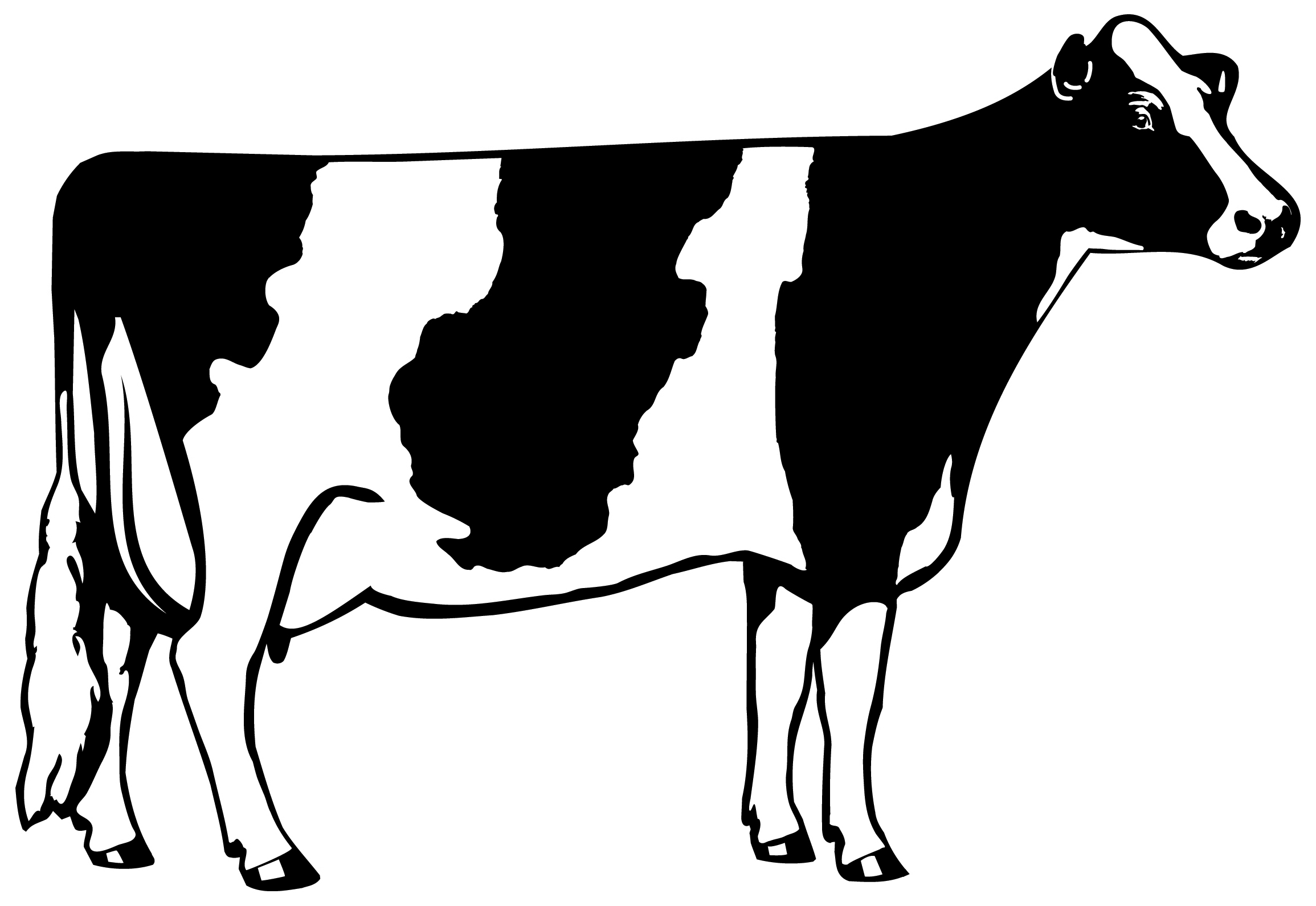 Also Available For Download A Simple Holstein Cow Image